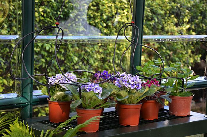 Gewaechshaus-Bewaesserungskit-Blumentopf