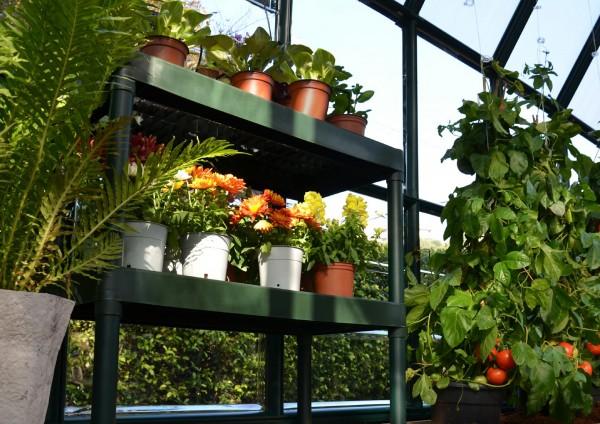 Gewaechshaus_einrichten_Tipps_fuer_Garten_Profis